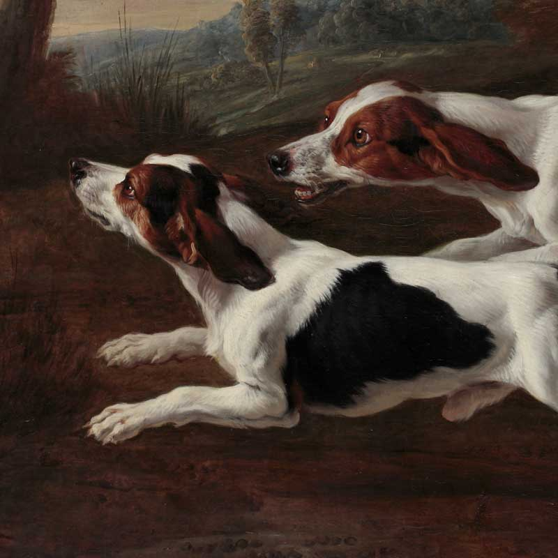 Beagles chassant un lièvre